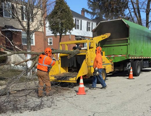 tree-removal-workers