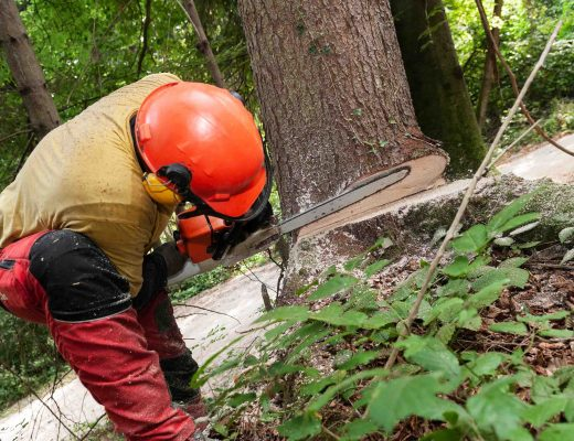 Forestry Worker In Protective Gear Using A Chainsaw To Cut Down