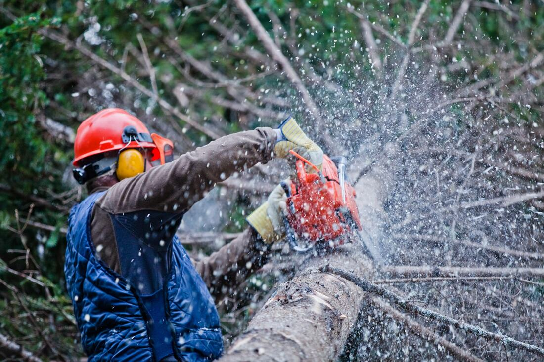 The Different Kinds Of Tree Services Pax Librorum