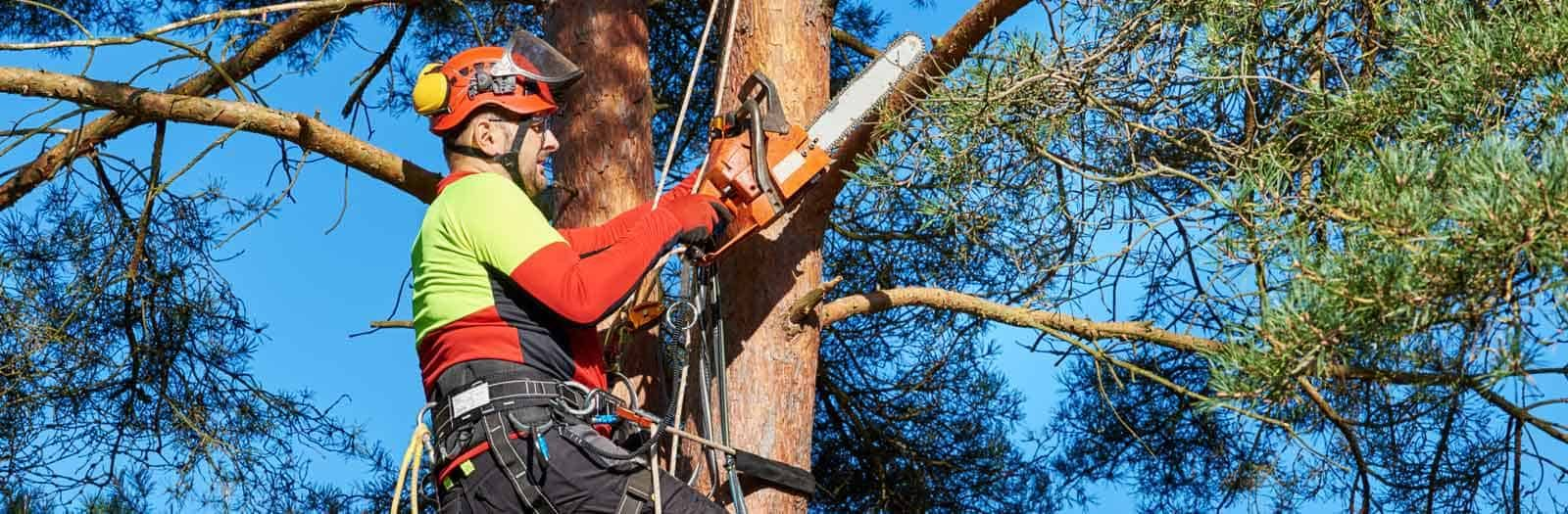 professional-tree-services