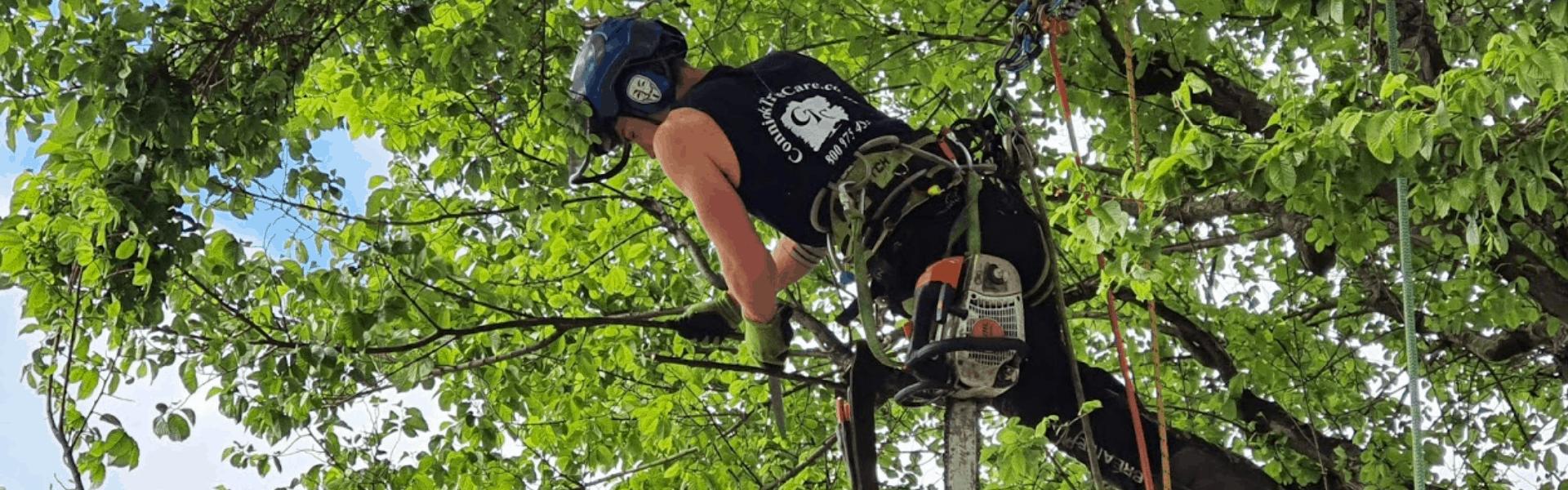 arborist salary 2018