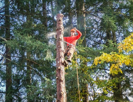 logger for free tree removal